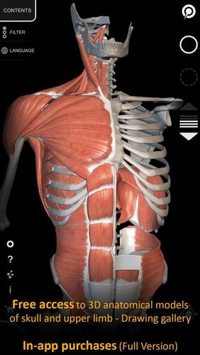 Muscle | Skeleton - 3D atlas of anatomy screenshot.