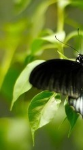 New 540x960 mobile wallpapers Butterflies, Insects free download.