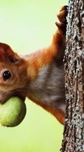 New mobile wallpapers - free download. Animals, Squirrel picture and image for mobile phones.