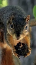 New mobile wallpapers - free download. Squirrel,Animals picture and image for mobile phones.