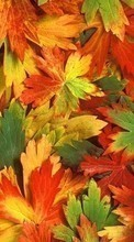 New mobile wallpapers - free download. Background,Leaves,Autumn picture and image for mobile phones.