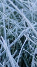 New 240x400 mobile wallpapers Plants, Winter, Grass, Backgrounds free download.