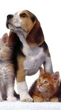 New 240x320 mobile wallpapers Animals, Cats, Dogs free download.