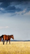 Horses,Landscape,Animals