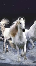New mobile wallpapers - free download. Horses,Animals picture and image for mobile phones.