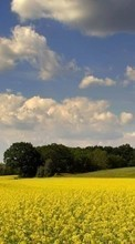 New 240x400 mobile wallpapers Landscape, Fields, Sky free download.