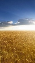 New 320x480 mobile wallpapers Landscape, Fields, Sky, Sun, Wheat free download.