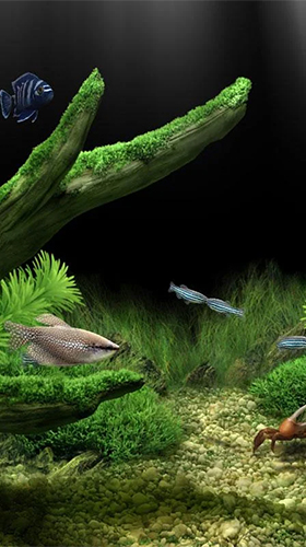 Download Aquarium by Red Stonz free Aquariums livewallpaper for Android phone and tablet.