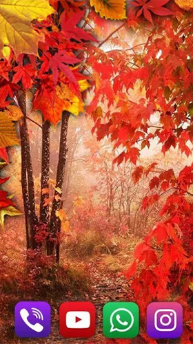 Download Autumn rain by SweetMood free Interactive livewallpaper for Android phone and tablet.