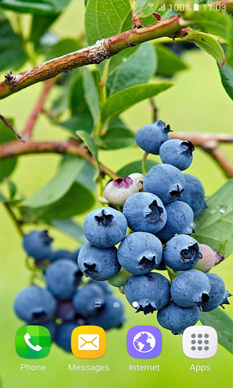 Download Berries free Food livewallpaper for Android phone and tablet.