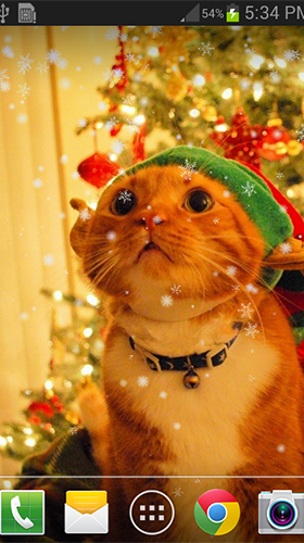 Download Christmas cat by live wallpaper HongKong free Holidays livewallpaper for Android phone and tablet.