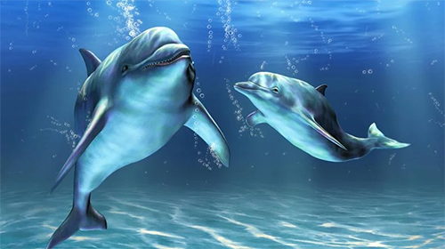 Download Dolphins 3D by Mosoyo free 3D livewallpaper for Android phone and tablet.