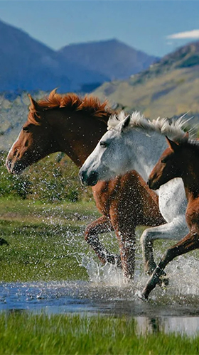 Download Horses by Pro Live Wallpapers free livewallpaper for Android phone and tablet.