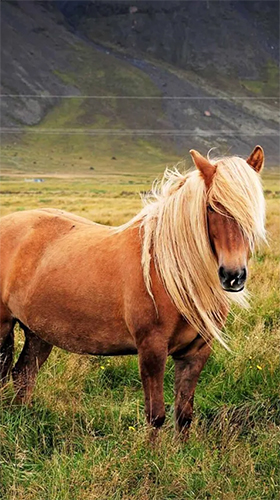 Download Pony free Animals livewallpaper for Android phone and tablet.