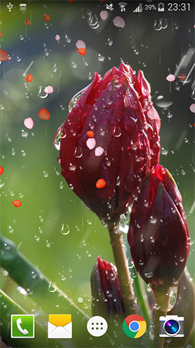Download livewallpaper Rose: Raindrop for Android.