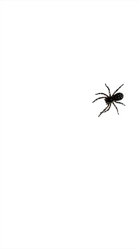 Download Spider by villeHugh free Animals livewallpaper for Android phone and tablet.