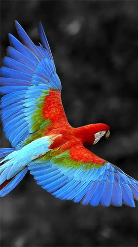 Download Talking parrot free Animals livewallpaper for Android phone and tablet.