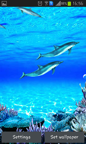 Download livewallpaper Dolphins sounds for Android.