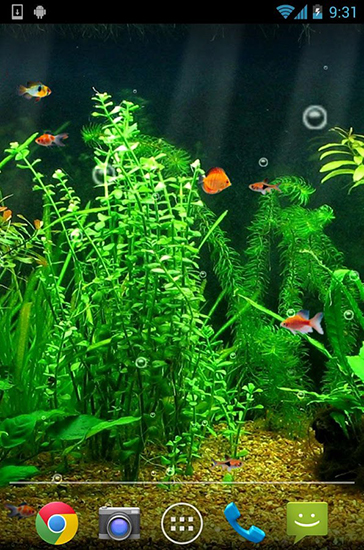 Download Fishbowl free livewallpaper for Android 4.0.1 phone and tablet.
