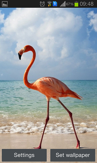 Download Flamingo free livewallpaper for Android 4.4.4 phone and tablet.