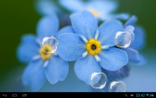 Download Forget-me-not free livewallpaper for Android 4.1.2 phone and tablet.