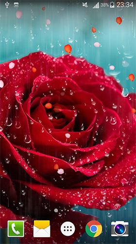 Rose: Raindrop apk - free download.