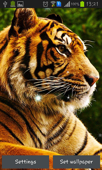 Download Tigers free livewallpaper for Android 4.1.2 phone and tablet.