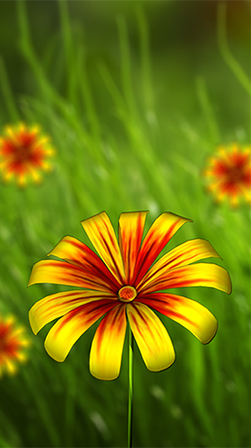 Screenshots of the live wallpaper Flower 360 3D for Android phone or tablet.