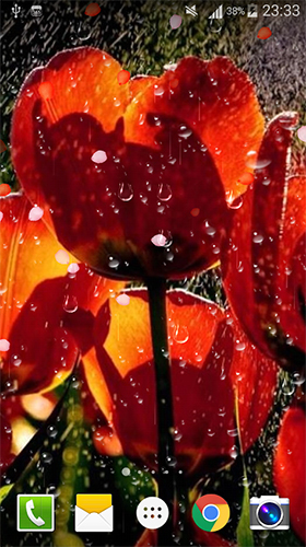Screenshots of the live wallpaper Rose: Raindrop for Android phone or tablet.