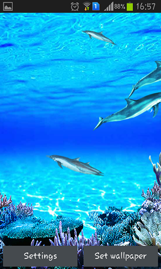 Screenshots of the live wallpaper Dolphins sounds for Android phone or tablet.