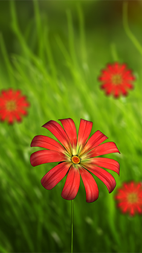 Full version of Android apk livewallpaper Flower 360 3D for tablet and phone.