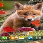 Autumn by Amax LWPS apk - download free live wallpapers for Android phones and tablets.