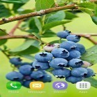 Berries apk - download free live wallpapers for Android phones and tablets.