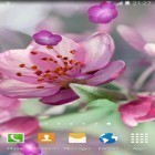 Download live wallpaper Cherry Blossom for free and Koi for Android phones and tablets .