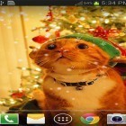 Christmas cat by live wallpaper HongKong apk - download free live wallpapers for Android phones and tablets.