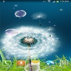 Download live wallpaper Dandelions by Amax LWPS for free and Rose: Raindrop for Android phones and tablets .