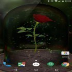 Download live wallpaper Enchanted Rose for free and Deep space 3D for Android phones and tablets .