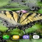 Download live wallpaper Macro butterflies for free and Hearts by Kittehface Software for Android phones and tablets .