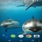 Download live wallpaper Ocean 3D: Dolphin for free and Koi for Android phones and tablets .
