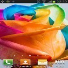 Download live wallpaper Rainbow roses for free and Rose: Raindrop for Android phones and tablets .