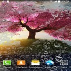 Romantic apk - download free live wallpapers for Android phones and tablets.