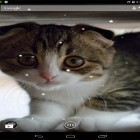 Scottish fold cat apk - download free live wallpapers for Android phones and tablets.