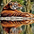 Tigers by Live Wallpaper HD 3D apk - download free live wallpapers for Android phones and tablets.