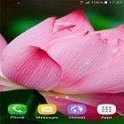 Download live wallpaper Tropical flowers for free and Hearts by Kittehface Software for Android phones and tablets .