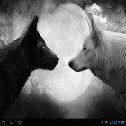Download live wallpaper Wolves for free and Spring landscape for Android phones and tablets .