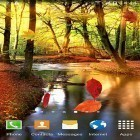 Download live wallpaper Autumn forest for free and Sunny forest for Android phones and tablets .