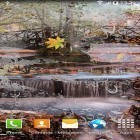 Download live wallpaper Autumn landscape for free and Sea for Android phones and tablets .