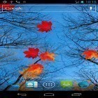 Download live wallpaper Autumn maple for free and Waterfall by Red Stonz for Android phones and tablets .