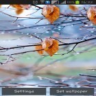 Download live wallpaper Autumn raindrops for free and Thunderstorm by Creative Factory Wallpapers for Android phones and tablets .