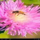 Download live wallpaper Bee on a clover flower 3D for free and Home tree for Android phones and tablets .